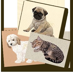 Lemmikloomad