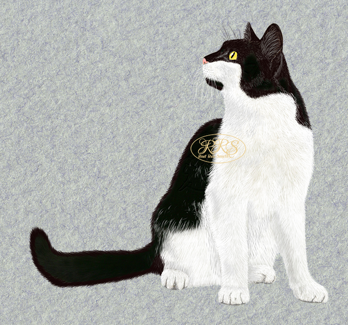 Kass Sooru
