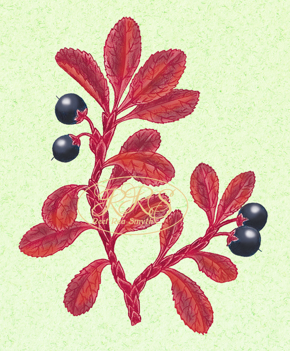 Alpine bearberry