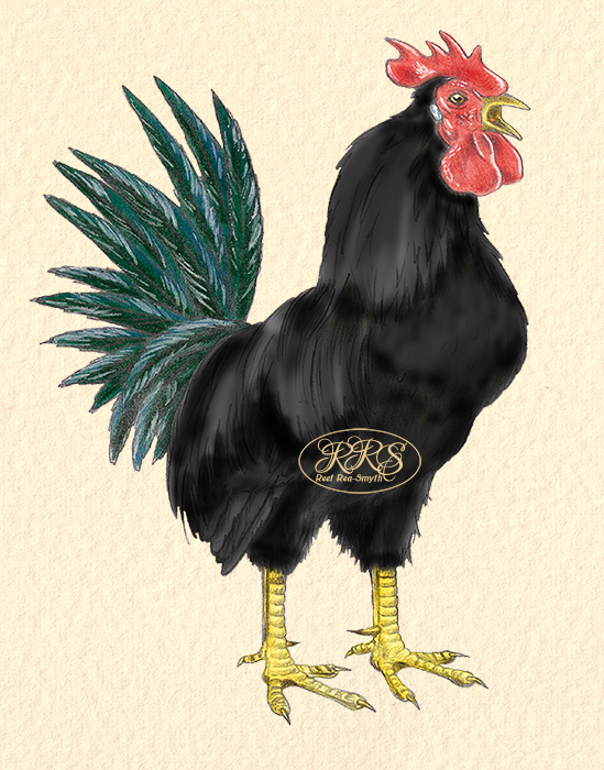Black cockerel