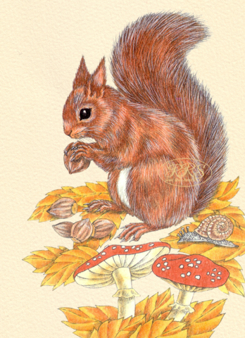 Card with a squirrel