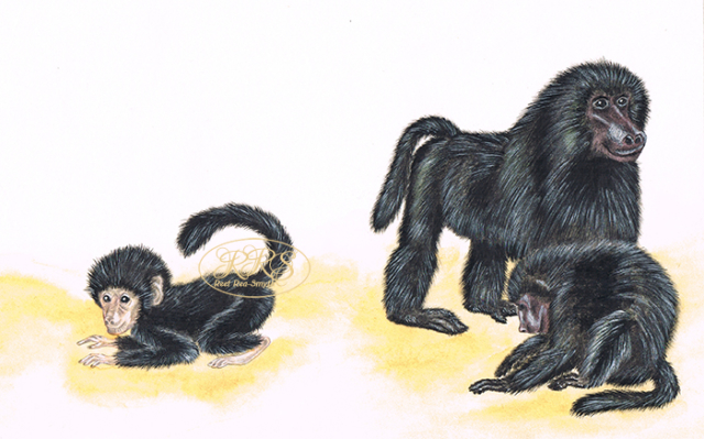 Eugène N. Marais 'Monkey Soul' cover image