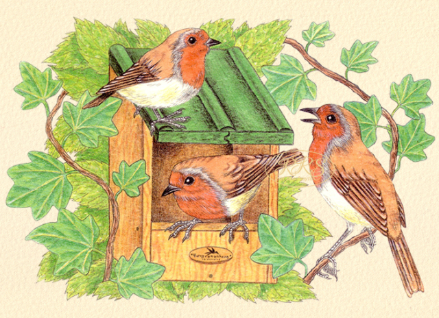 Card with robins