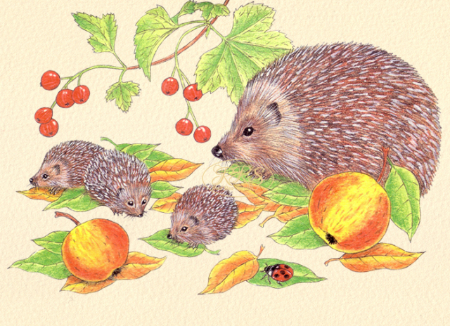 Card with hedgehogs