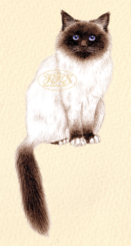 Püha Birma kass