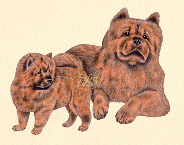 Chow chow with a puppy