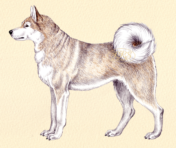 Grööni koer