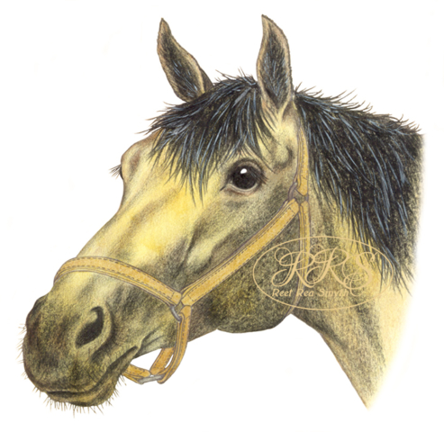 Hobuse portree