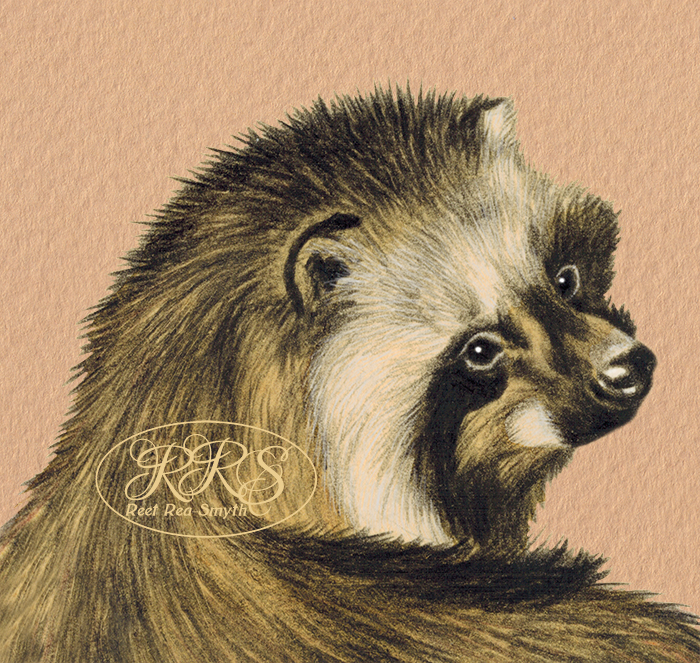 Raccoon dog portrait