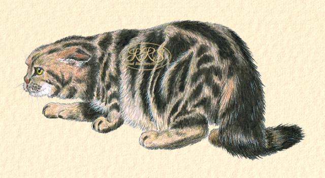 Luurav kass