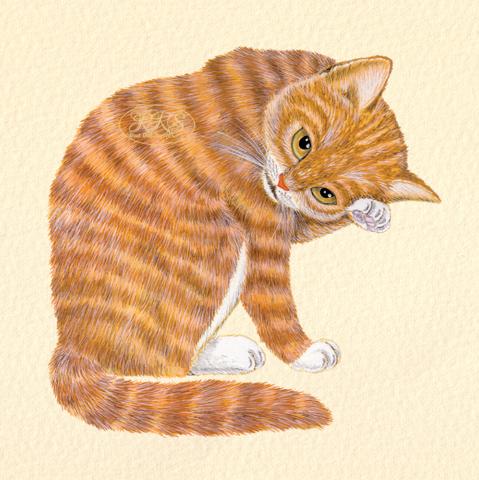 Punane kass
