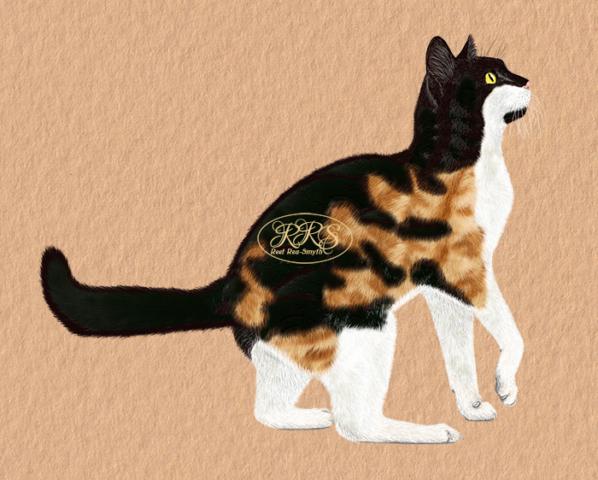 Kirju kass
