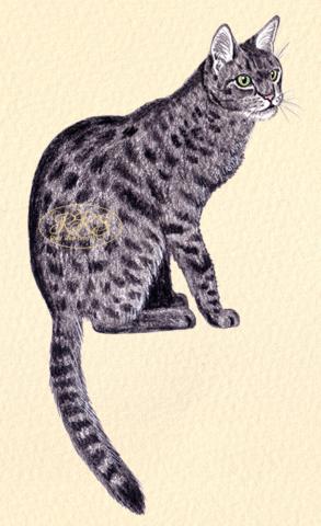 Kirju kass istumas