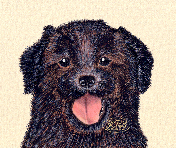 Puppy portrait