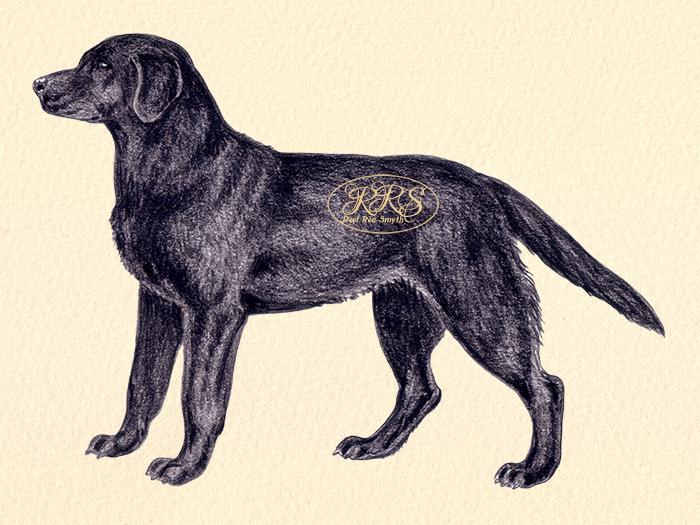 Labradori retriiver