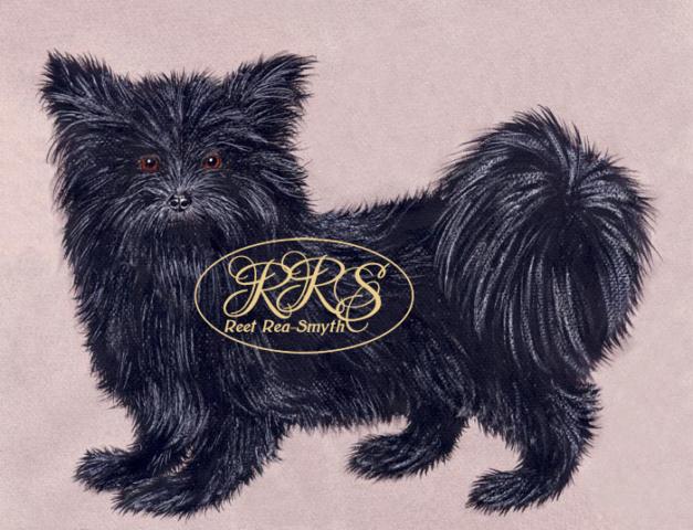 Väike must koer