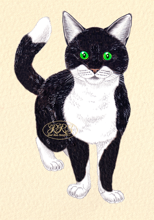 Mustvalge kass