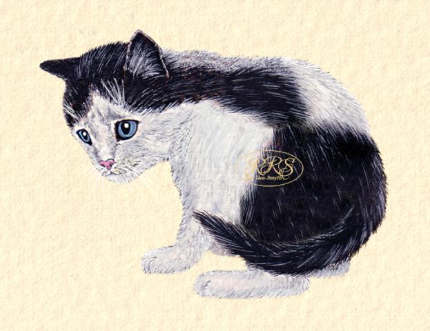 Mustvalge kassipoeg