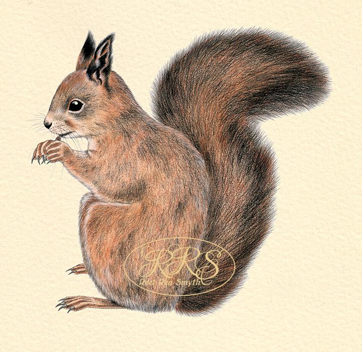 Orav sööb