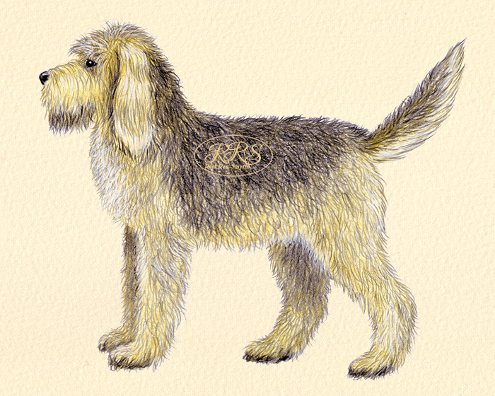 Saarmakoer ehk Otterhound