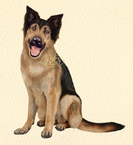 Mixed-breed dog Polla