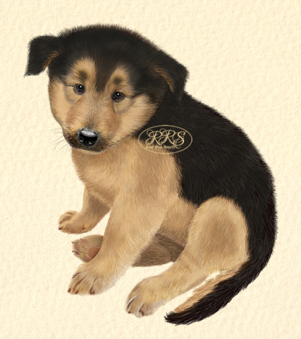 Mixed-breed puppy Polla