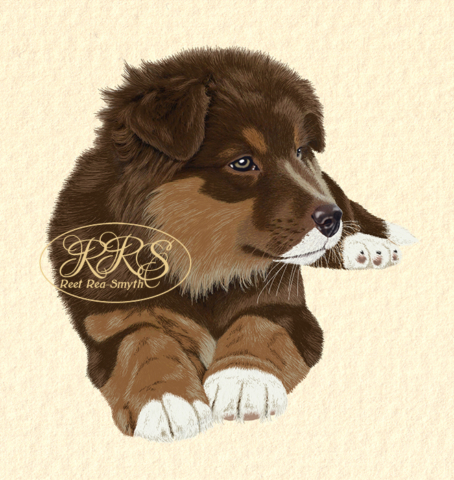 Mixed-breed puppy