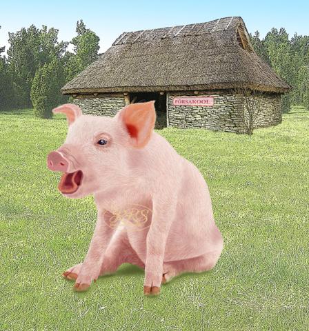 Piglet in front of the school