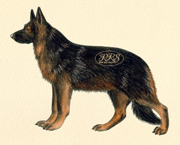 Saksa lambakoer