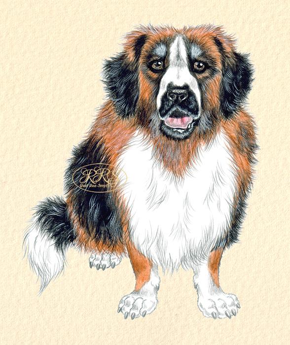Suur koer