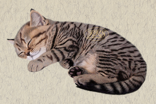 Kitten Triibik