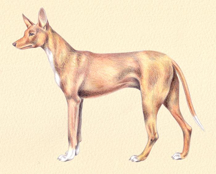 Vaaraokoer