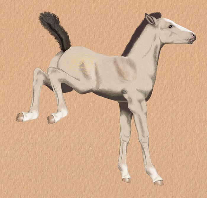 Foal Viki